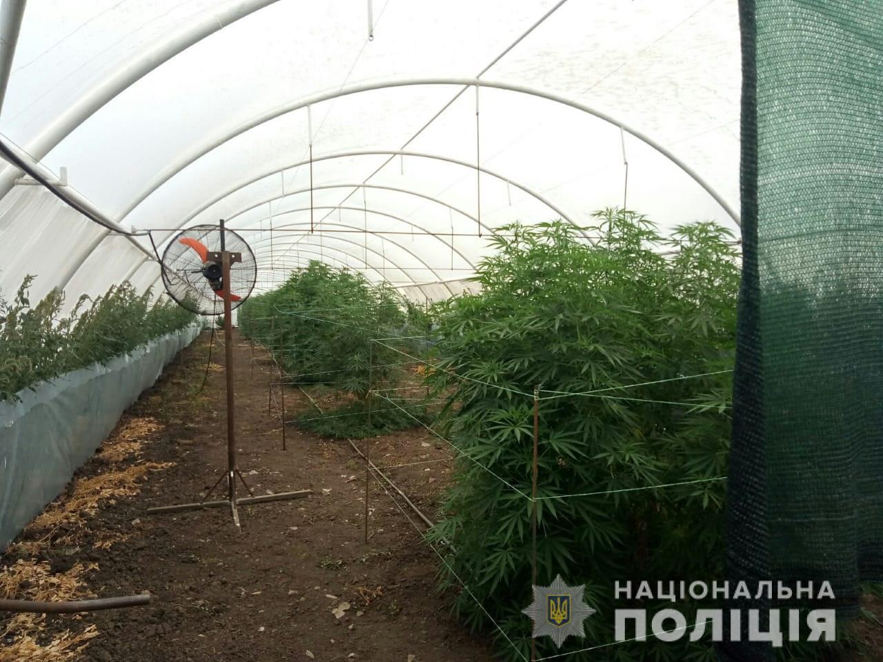 Полиция с высоты птичьего полёта обнаружила наркоплантации в Запорожской области (ФОТО)