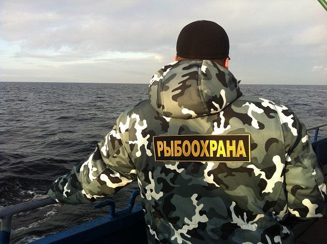 «Бизнес» на мотыле: в Запорожской области организована схема по незаконному экспорту мотыля, зараженного отходами ЗЖРК