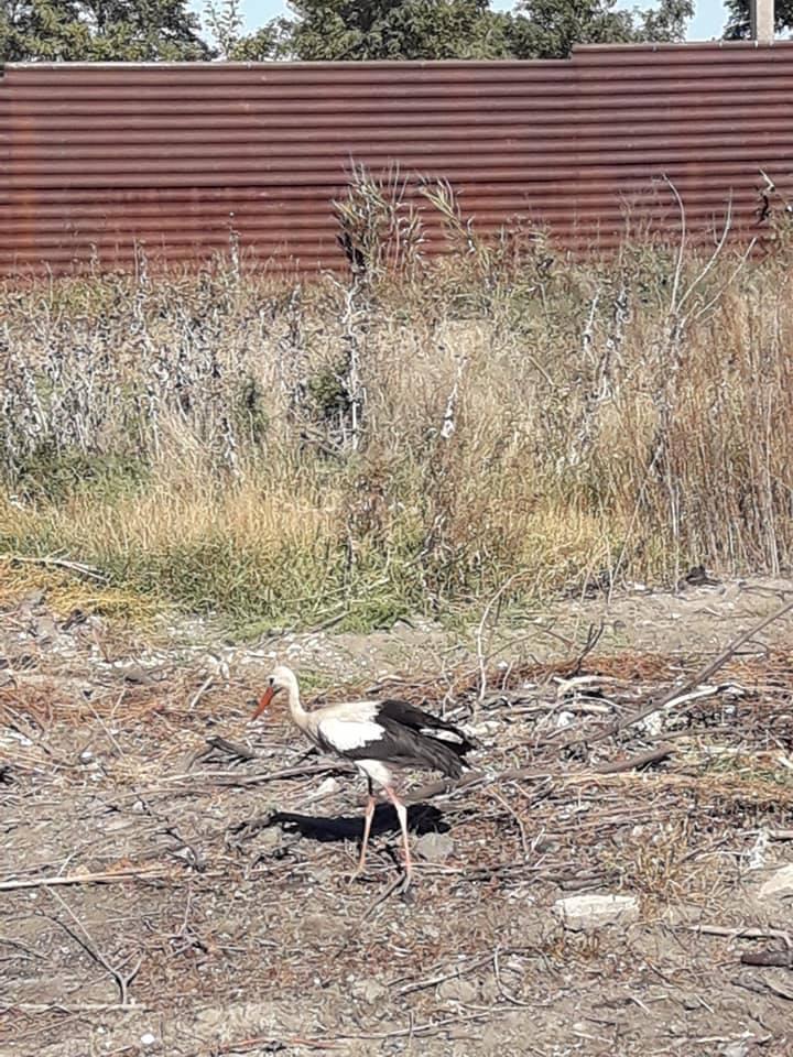 У Запоріжжі просять врятувати червонокнижного птаха