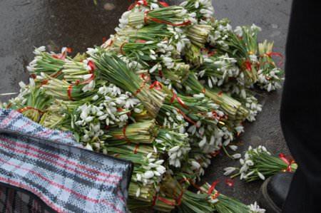 За уничтожение и продажу подснежников жители Запорожья заплатят штраф