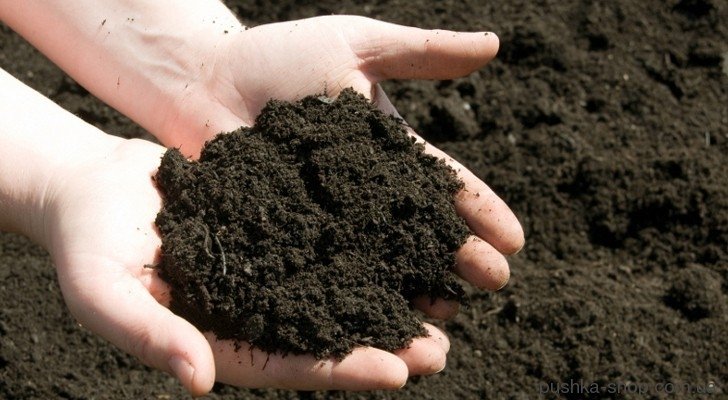 У Запорізькій області найдешевша оренда гектару приватної сільськогосподарської землі по країні
