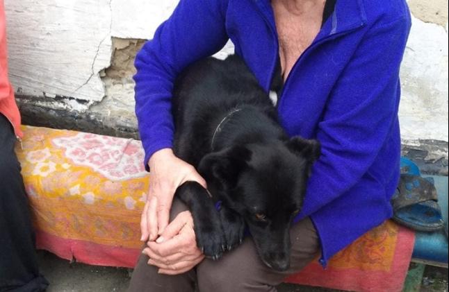 Грустная история со счастливым концом: пес, в которого стрелял запорожец, обрел семью (Фото)