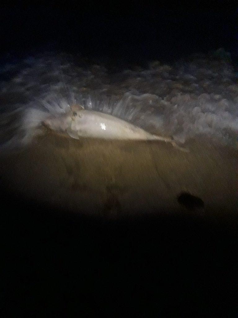 На побережье запорожского курорта снова обнаружили мертвого краснокнижного дельфина (Фото)