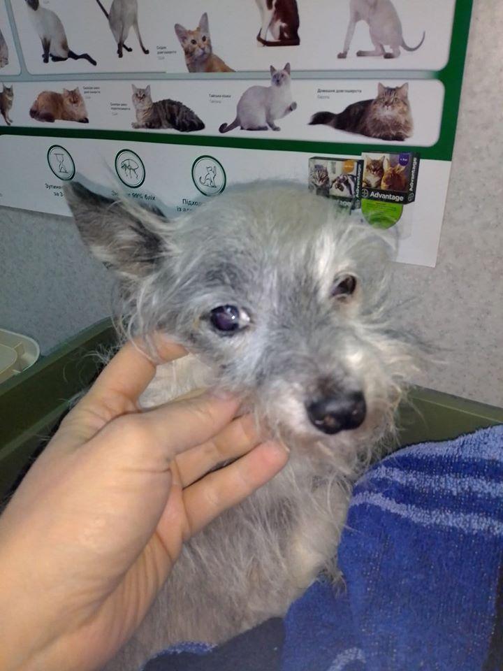 Собачке, которая могла погибнуть от рук живодера в Запорожье, сделали операцию (ФОТО, ВИДЕО)
