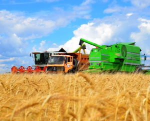 В Украине собрали 40 млн тонн зерна