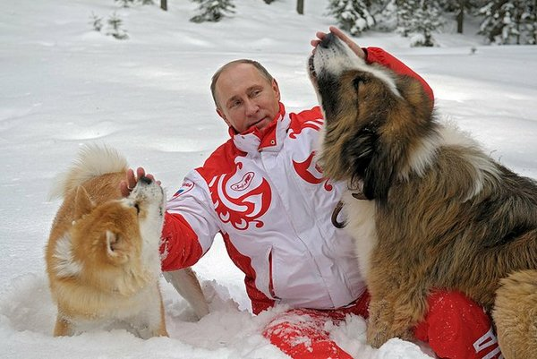 Журналист немецкого издания Focus обозвал Путина собакой