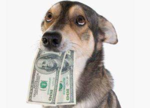 В Украине хотят ввести налог на котов и собак