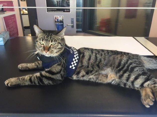 В Новой Зеландии кошка стала сотрудником полиции