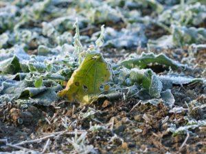 В Запорожье идут заморозки