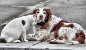 Бездомные и агрессивные: как в Запорожье будут решать проблему брошенных собак