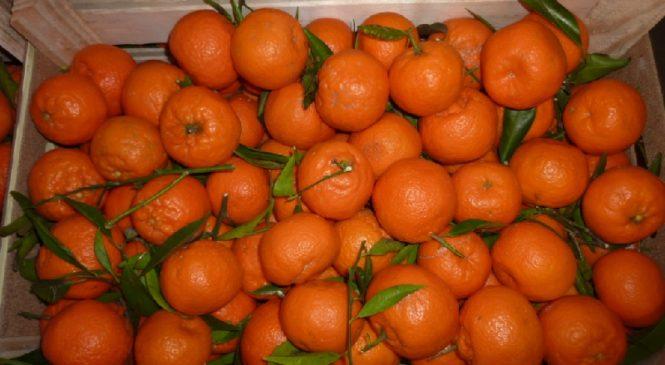 В Украине подешевеют турецкие цитрусовые