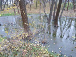 Запорожская власть потратила 10 млн. гривен на уничтожение 300-летних дубов парка «Дубовая роща»?