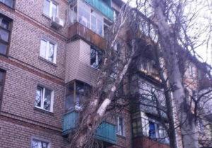 В Запорожье огромное дерево рухнуло на 5-этажку