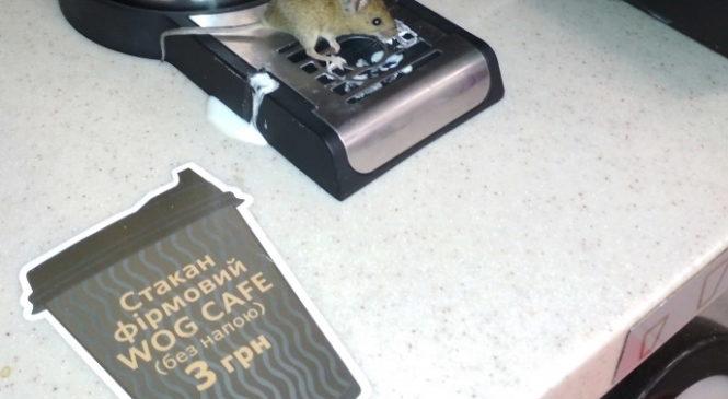На одной из мелитопольских АЗС мышь лакомилась молоком (ФОТО)