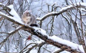 В Запорожье мужчина спасая кота сам застрял на дереве
