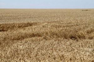 Рейдерский захват агропредприятия в запорожской области