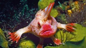 В Австралии найдена рыба, которая ходит по дну лапами