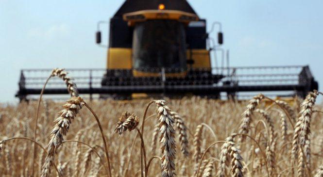 Аграрный экспорт Украины в ЕС вырос до 5,2$ млрд.