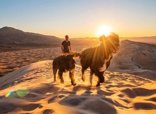 Спасение щенков брошеных в пустыне