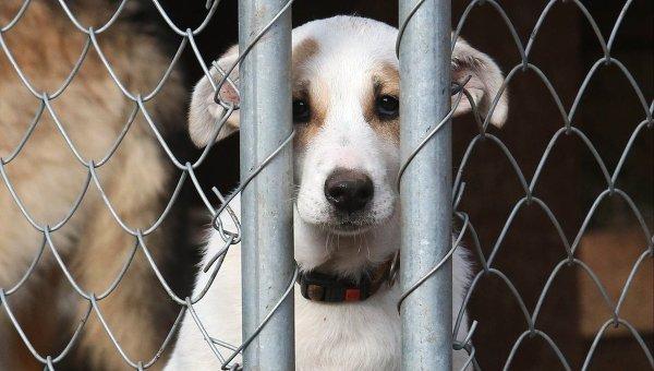 Перераспределение полномочий: полиция и суд в делах о жестоком обращении с животными
