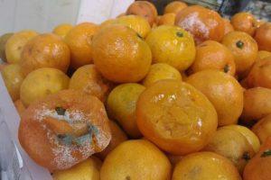 Запорожские супермаркеты предлагают покупателям приобрести мандарины с плесенью по акционной цене