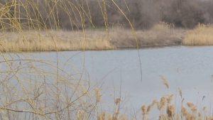 В Запорожье на пруду обнаружен труп мужчины