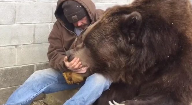 Человек утешает дикого зверя