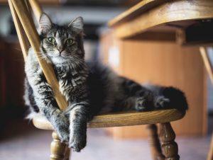 Кот, живущий на две семьи