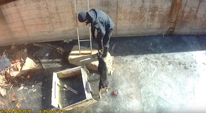 В Запорожье полицейские спасли животное, — ВИДЕО