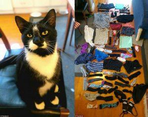 Кот ворующий одежду, — ВИДЕО