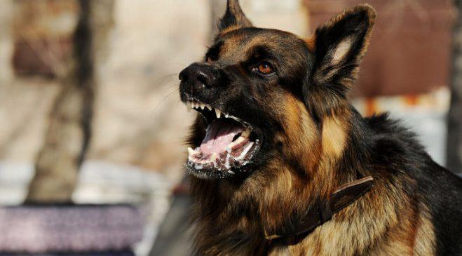 В Акимовке бродячая собака покусала 6-летнего мальчика