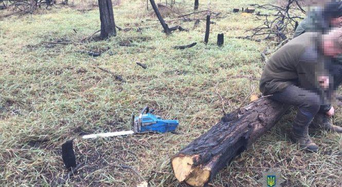 В Запорожье неизвестные незаконно вырубали деревья — ФОТО