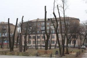 «Кладбище деревьев»: как в Запорожье экологию уничтожают неправильным кронированием