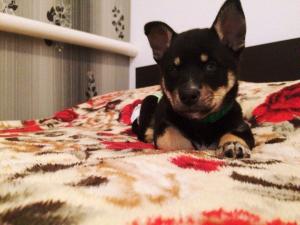 Помогите разыскать собаку с особыми приметами