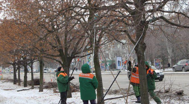 В Запорожье озеленители готовят деревья к весне