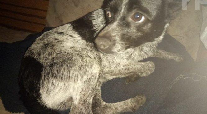 В Запорожской области собака спасала собаку, — ФОТО