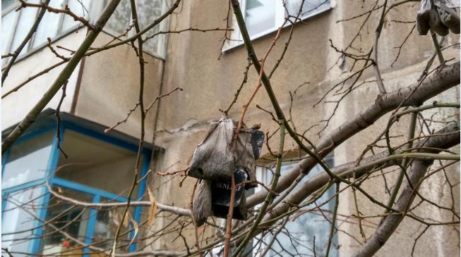 Трэш и ужас Кичкаса: в сеть попало фото «чайного» дерева