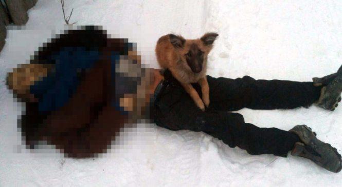 Шокирующий фотофакт: на Шевченковском собака охраняла труп бездомного