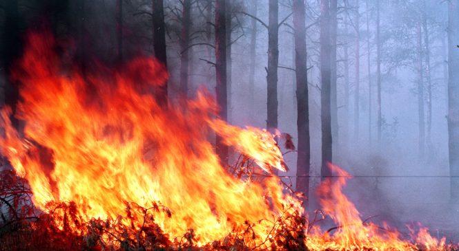В Запорожье и области за сутки произошло два пожара на открытой территории