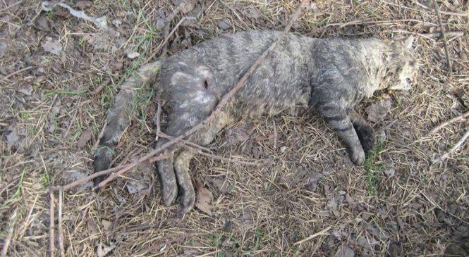 В Запорожье орудует серийный убийца кошек