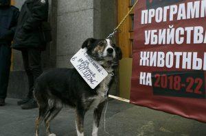 Брижит Бардо написала письмо мэру Бердянска с просьбой прекратить убийства собак