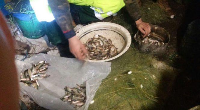 В Запорожской области браконьеры незаконно наловили рыбки на 26 тысяч гривен