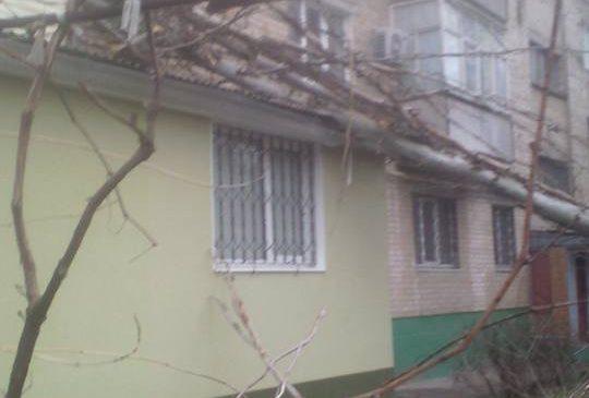 Стихия бушует: из-за непогоды дерево упало на жилой дом