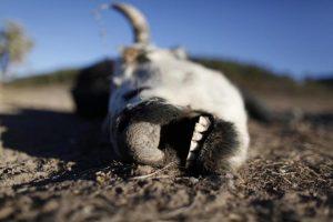 В Запорожской области обнаружили свалку костей рогатого скота