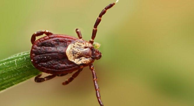 Опасные насекомые атакуют Запорожскую область