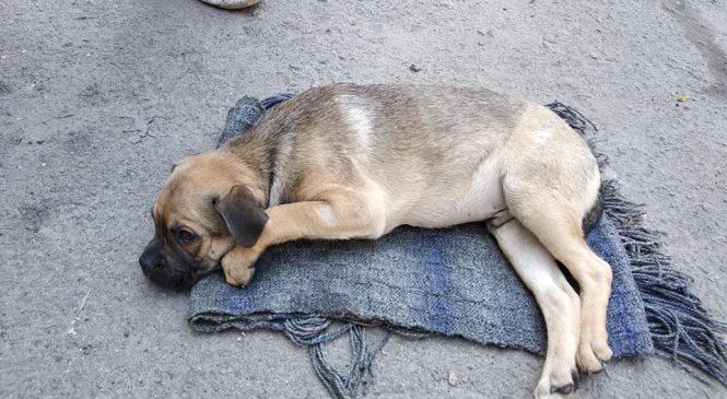 В Запорожье собирают деньги на лечение щенка, которого выбросили из окна