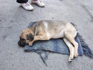 В Запорожье несчастный щенок постепенно поправляется