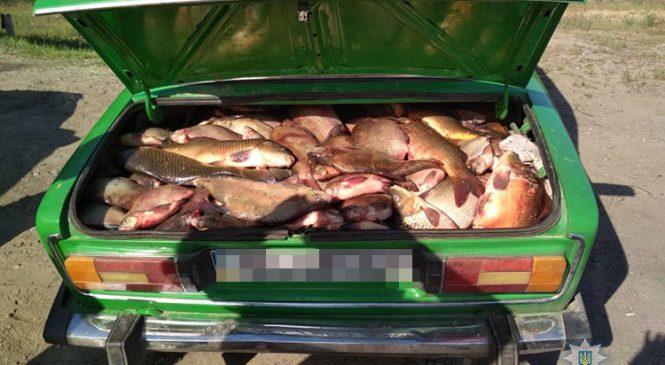 Под Запорожьем браконьеры попались с целым багажником рыбы