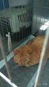 История рыжего кота, который попал в капкан в Запорожской области, закончилась благополучно (Фото)