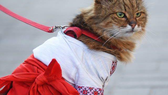 В Запорожье прошел марш вышиванок(Фоторепортаж)
